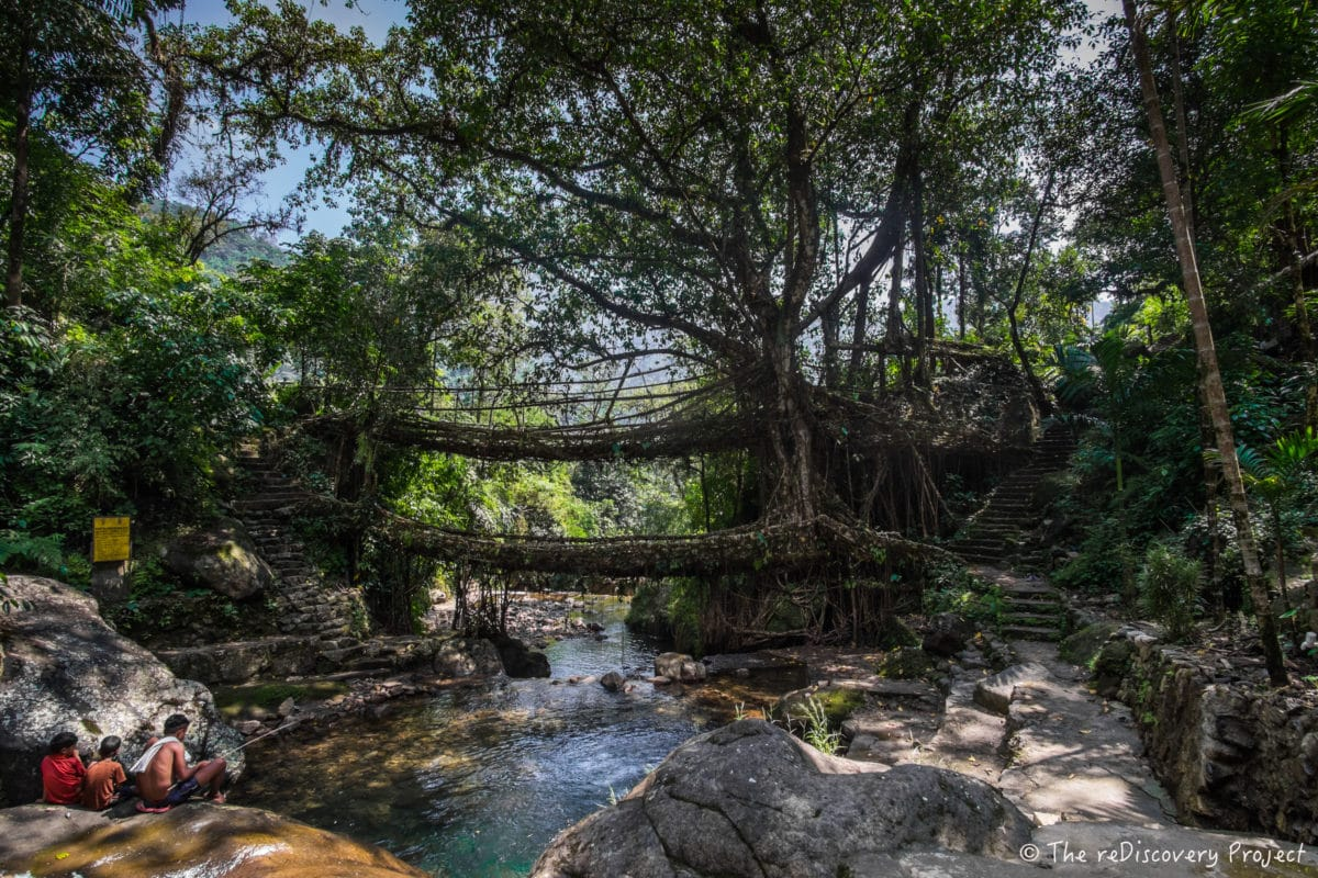 Nongriat, Root bridges