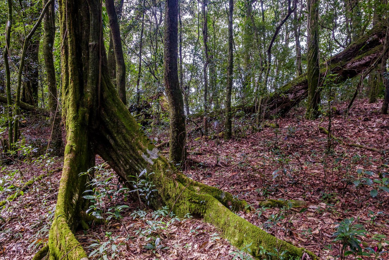 Sacred forest shillong