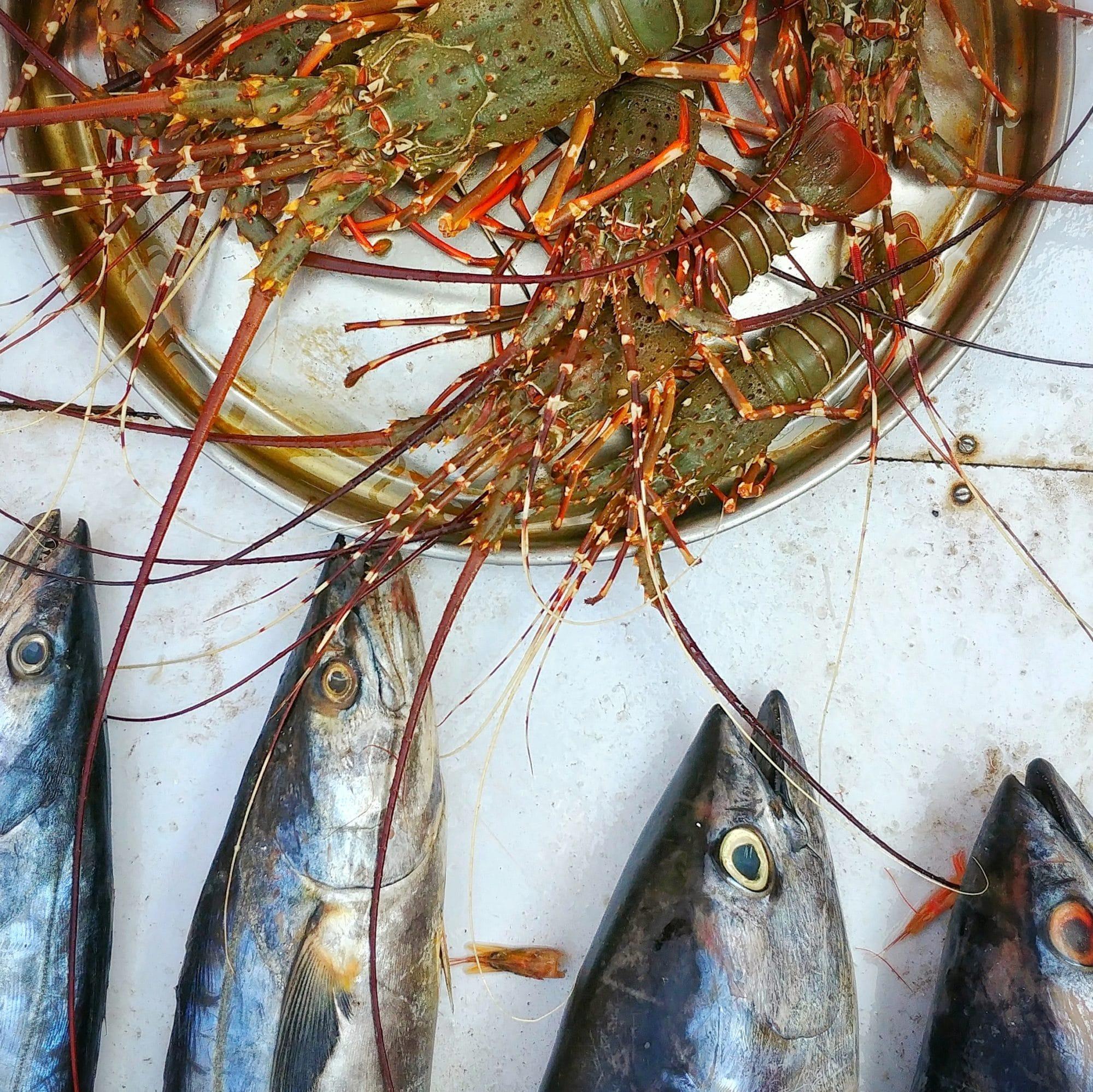 murud janjira fish market