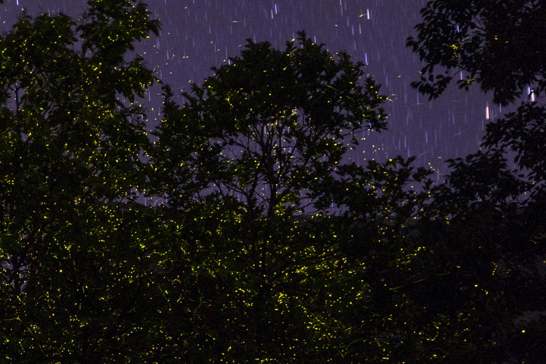 Fireflies, Bhandardara